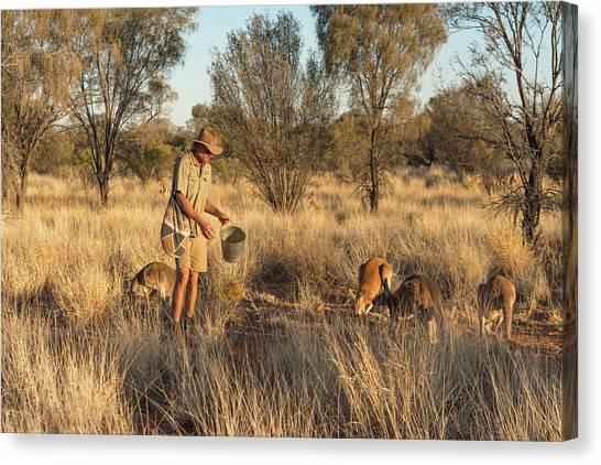 Kangaroo Sanctuary Canvas Print