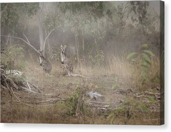 Wine Country Canvas Print - Kangaroos In The Mist by Az Jackson
