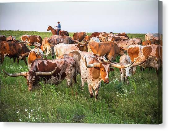 Kansas Flint Hills Longhorns Canvas Print