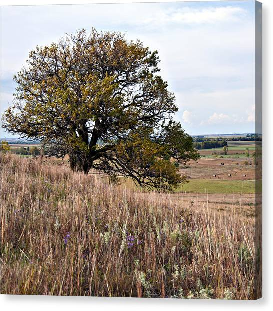 Kansas One Tree Hill Square Canvas Print