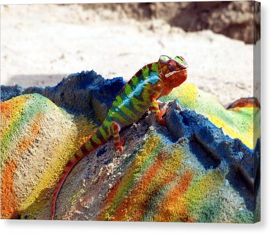 Karma Kameleon  Canvas Print