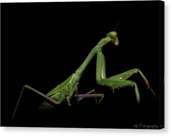 Katydid In Black Canvas Print