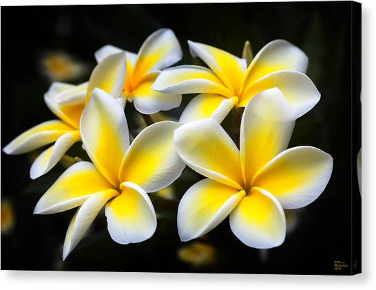 Plumerias Canvas Print,photographic Print,art Print,framed Print,iphone Case,samsung Galaxy Case, Canvas Print