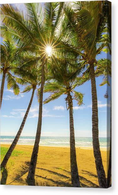 Palm Trees Sunsets Canvas Print - Kauai by Peter Irwindale