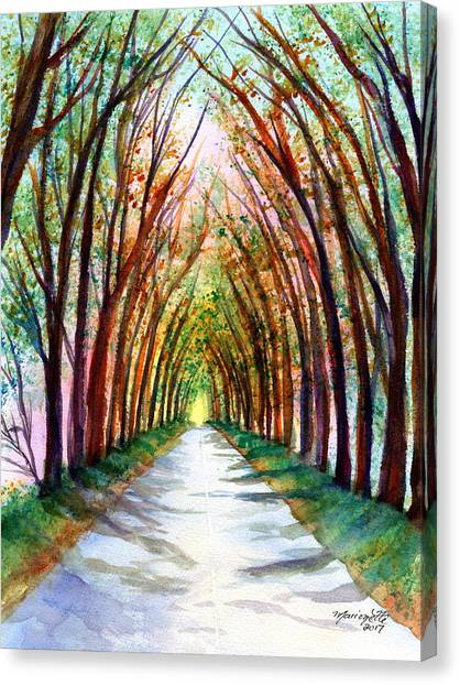 Kauai Tree Tunnel 4 Canvas Print
