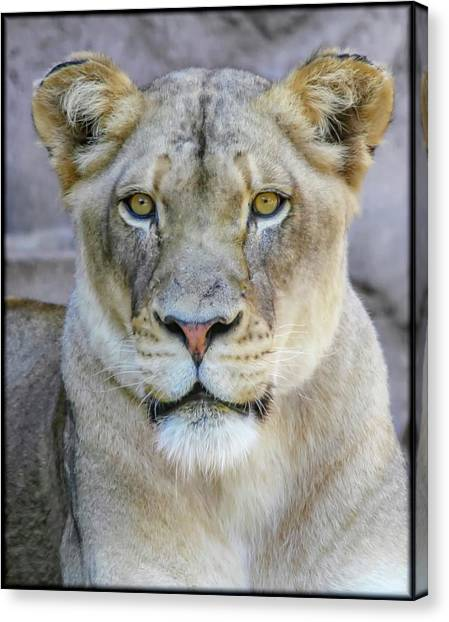 Kaya Portrait Canvas Print