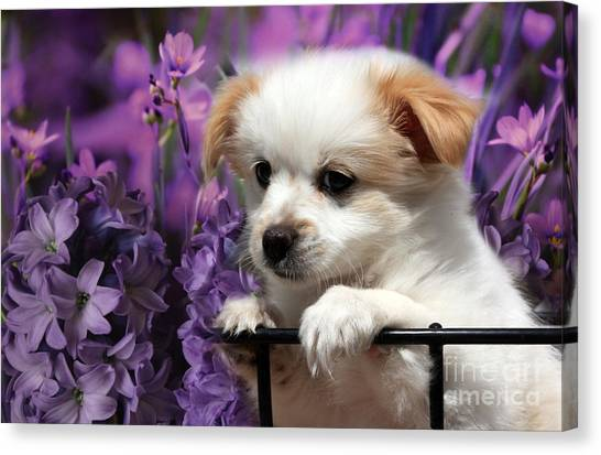 Kc In Flowers Canvas Print