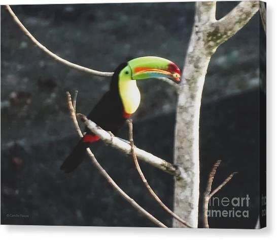 Keel-billed Toucan Canvas Print