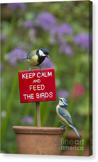 Titmice Canvas Print - Keep Calm And Feed The Birds by Tim Gainey