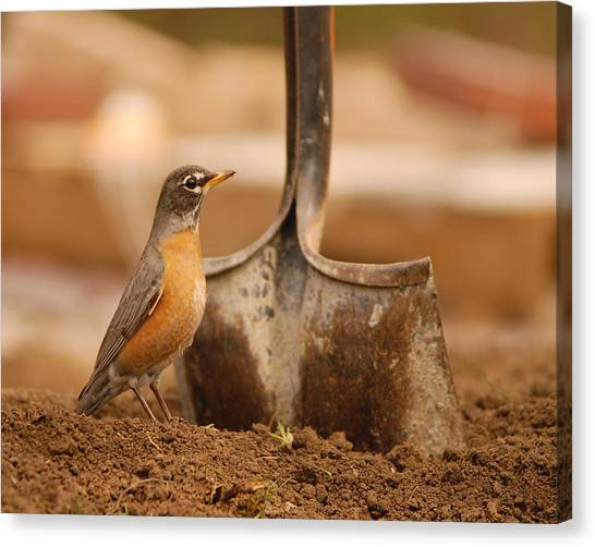 Keep Digging Canvas Print by Don Wolf
