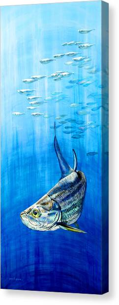 Tarpon Below Canvas Print