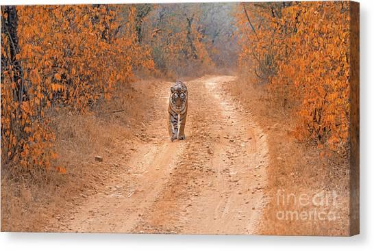 Keep Walking Canvas Print