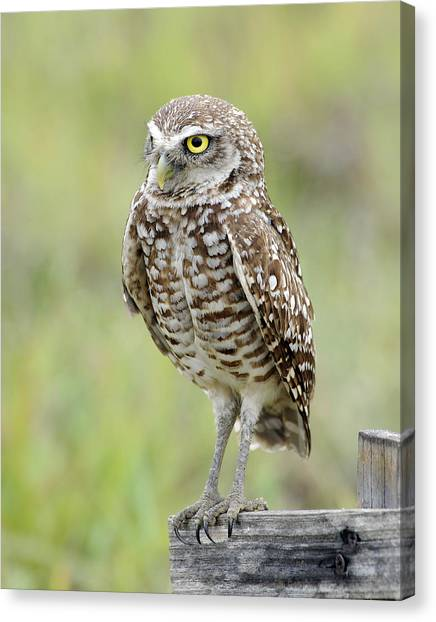 Keeping Watch Canvas Print by Keith Lovejoy
