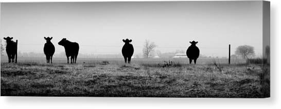 Kentucky Cows Canvas Print by Todd Fox