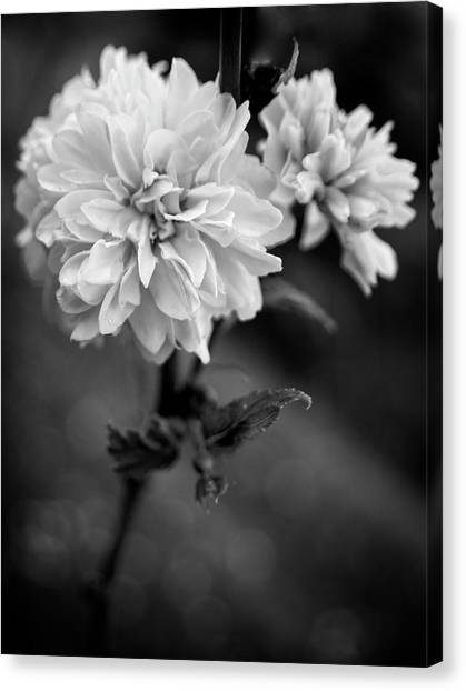 Kerria In Black And White Canvas Print