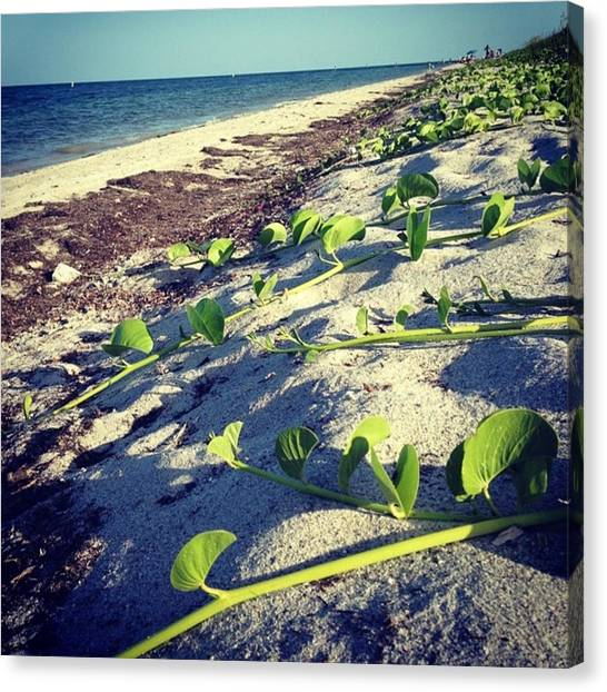 Florida Canvas Print - Key Biscayne, Florida #juansilvaphotos by Juan Silva