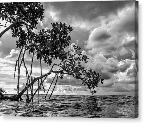 Key Largo Mangroves Canvas Print