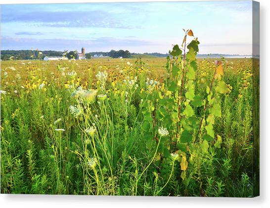 Prairie Sunrises Canvas Print - Keystone Landing Trail In Glacial Park by Ray Mathis