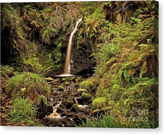 Kielder Forest Waterfall Canvas Print