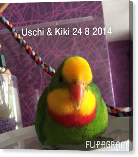 Lovebirds Canvas Print - Kiki & Uschi 24 8 2014 #schildsittiche by Alessandro  Lo Monaco
