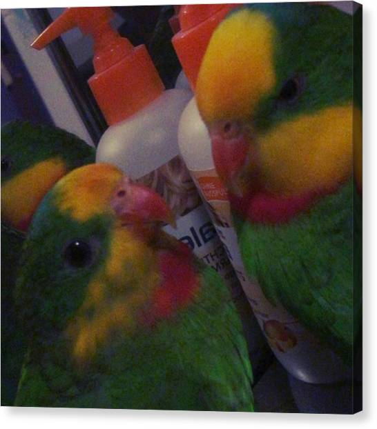 Lovebirds Canvas Print - Kiki & Uschi In Love #schildsittich by Alessandro  Lo Monaco