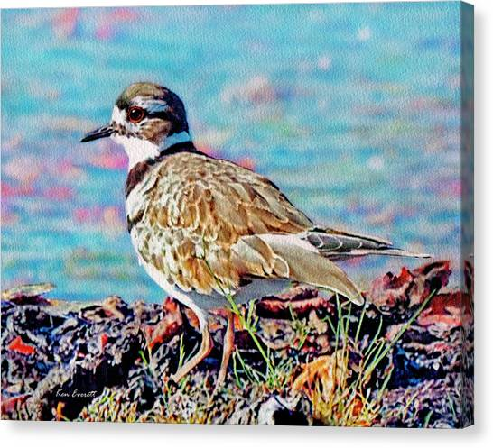 Killdeer Canvas Print - Killdeer  by Ken Everett