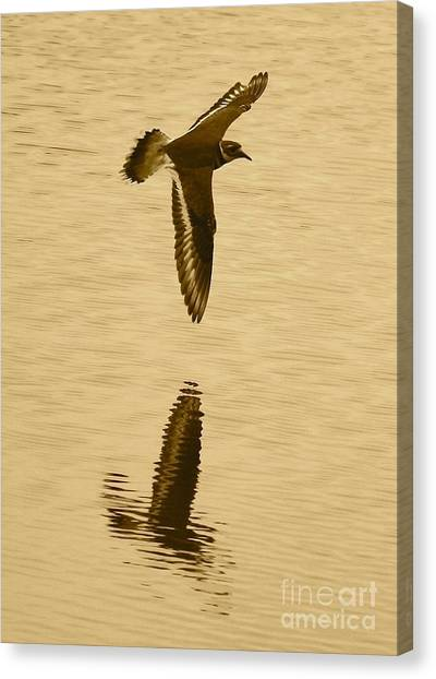 Killdeer Canvas Print - Killdeer Over The Pond by Carol Groenen