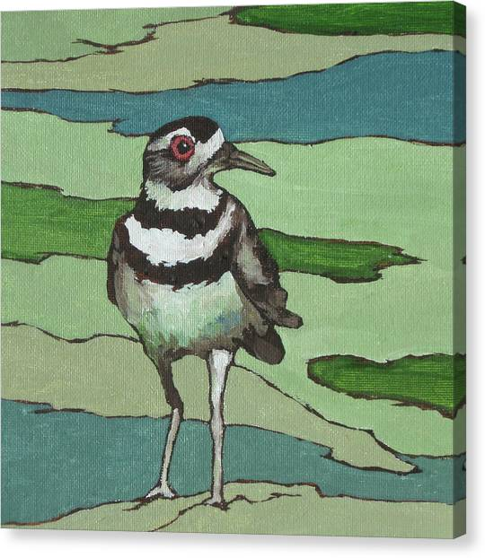 Killdeer Canvas Print - Killdeer by Sandy Tracey