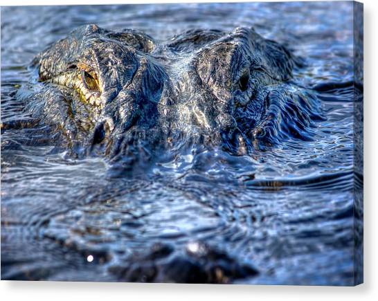 University Of Florida Canvas Print - Killer Instinct by Mark Andrew Thomas