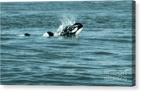 Canvas Print featuring the photograph Killer Whale by Wilko Van de Kamp