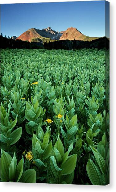 Kilpacker Basin Canvas Print
