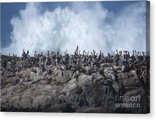 Kinda Crowded Canvas Print by Stan and Anne Foster