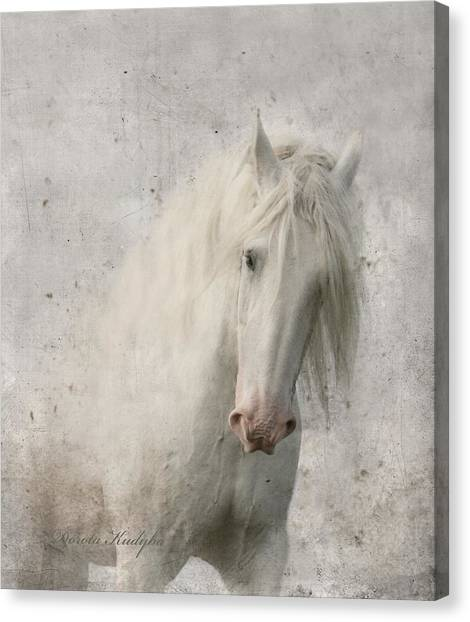 White Horse Canvas Print - Kindness by Dorota Kudyba