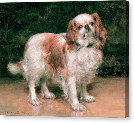 Animal Portraiture Canvas Print - King Charles Spaniel by George Sheridan Knowles