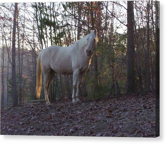 King Of The Hill Canvas Print by Kristen Hurley