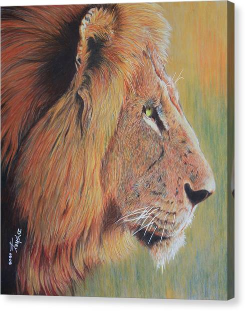 King Of The Jungle Canvas Print by Don MacCarthy