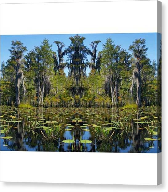 Okefenokee Canvas Print - King Of The Swamp On His Throne! This by Karen Breeze