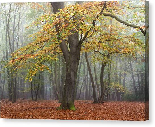 Nottinghamshire Canvas Print - King Of The Woods by Chris Dale