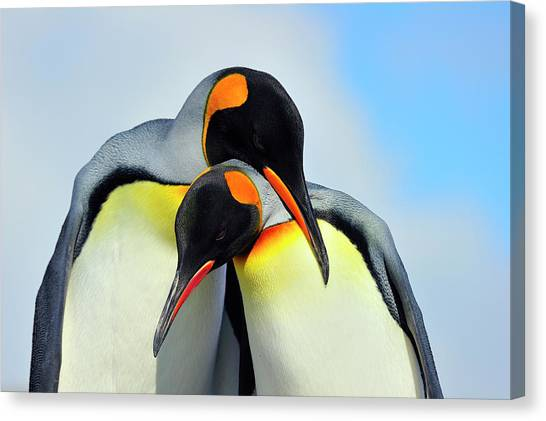 Antarctica Canvas Print - King Penguin by Tony Beck