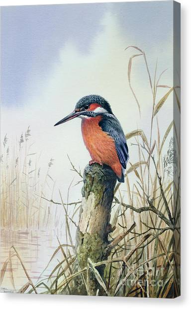Kingfisher Canvas Print - Kingfisher by Carl Donner