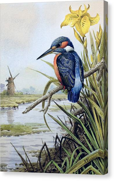 Kingfisher Canvas Print - Kingfisher With Flag Iris And Windmill by Carl Donner