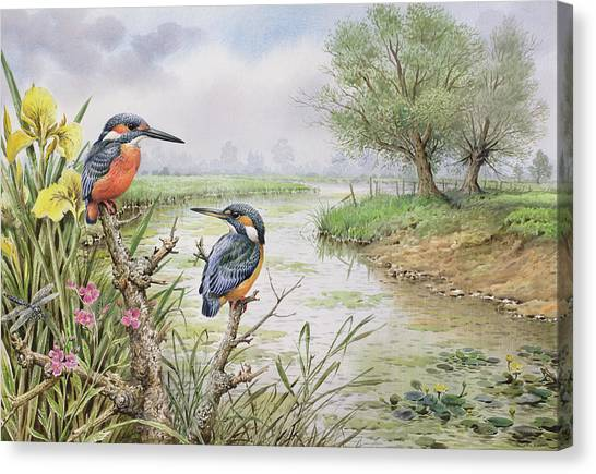 Kingfisher Canvas Print - Kingfishers On The Riverbank by Carl Donner