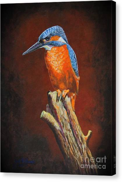 Kingfish.....waiting For Dinner Canvas Print