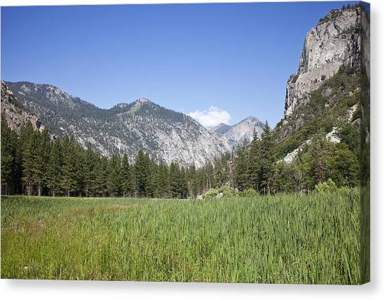 King's Meadow Canvas Print by Rick Pham