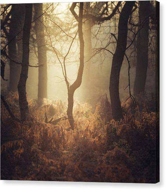 Sherwood Forest Canvas Print - Kink by Chris Dale
