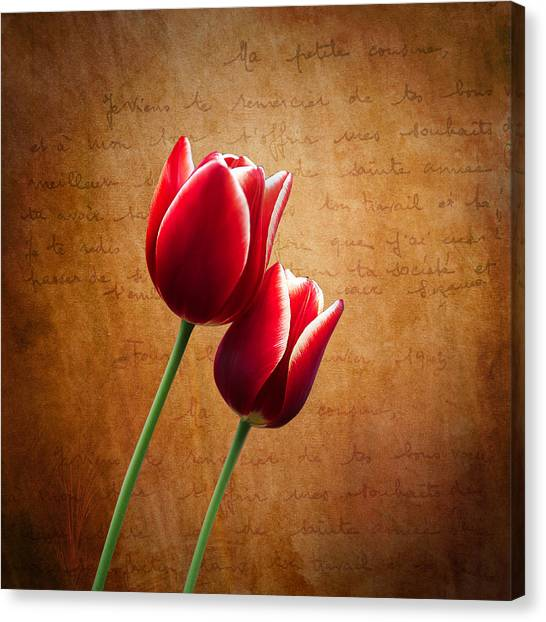 Tulips Canvas Print - Kissed By The Light by Ian Barber