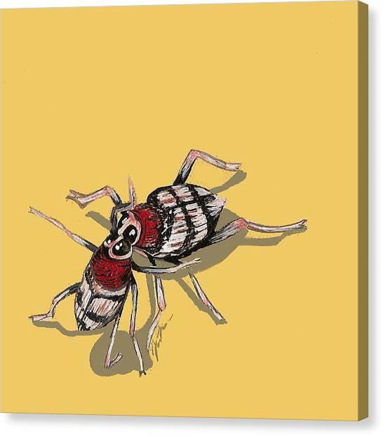 Kissing Weevils Canvas Print