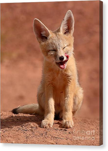 Kit Fox Pup Mid-lick Canvas Print