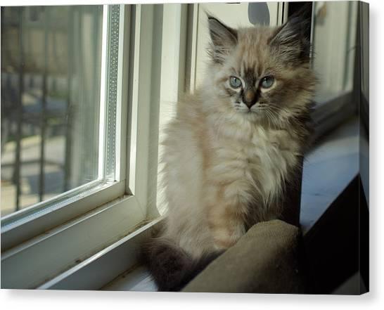 Canvas Print - Kitten Daydreams by Cindy Johnston