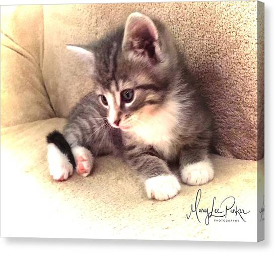Kitten Deep In Thought Canvas Print